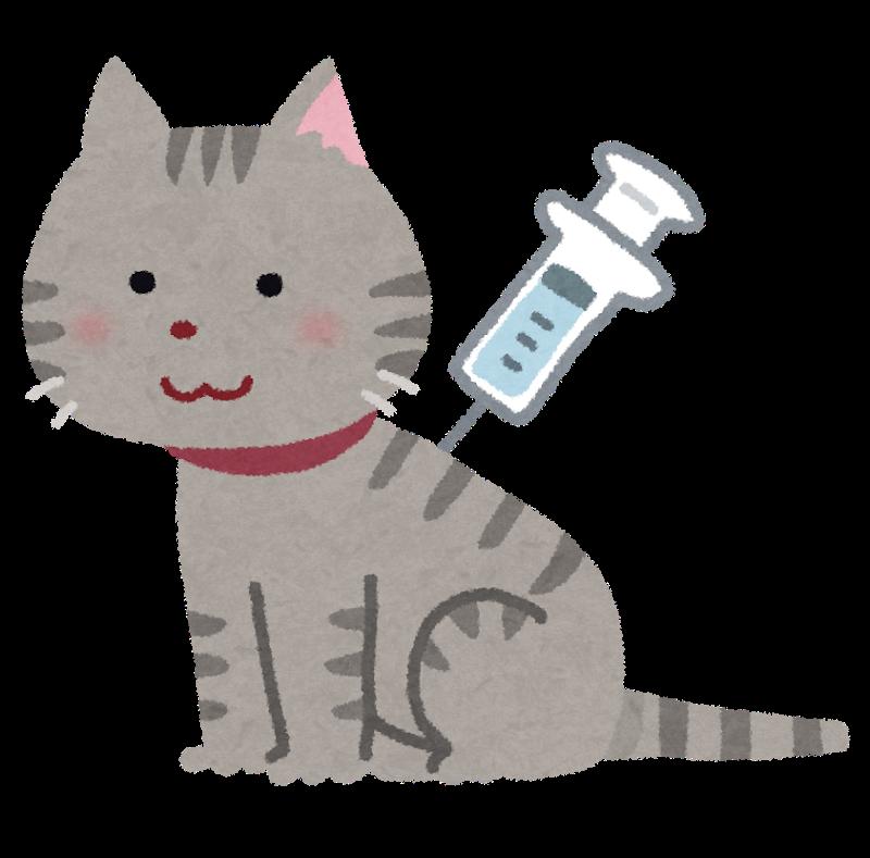 ネコ予防接種