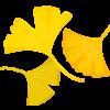 外苑の紅葉と2018いちょう祭り|146本の黄金ロードは必見!
