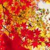 箱根の紅葉は別格だ!2018見ごろ時期&お薦めスポット攻略ガイド