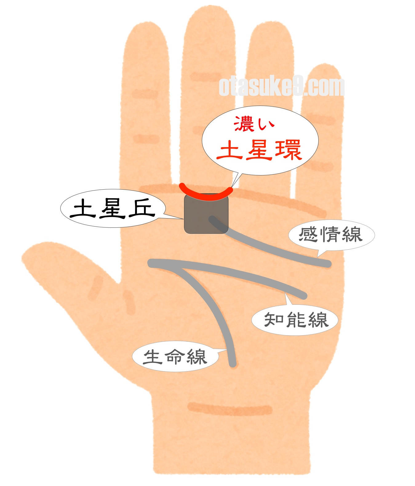 中指の下の輪